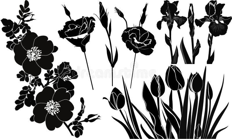 Fleurit des roses d'iris de tulipes illustration stock