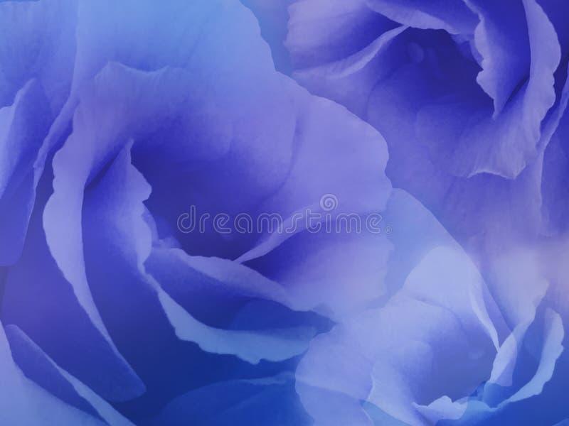 Fleurit des roses sur le fond bleu trouble fleurs Bleu-pourpres de roses collage floral Composition de fleur image stock
