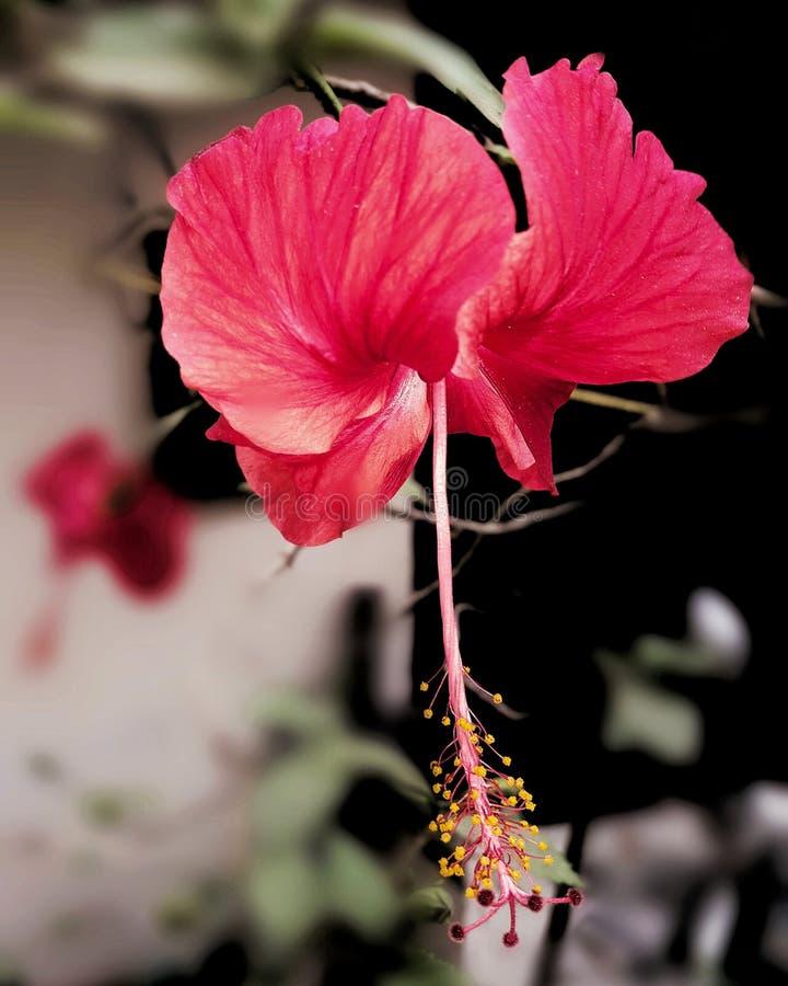 Fleurit des scènes de nature photos stock