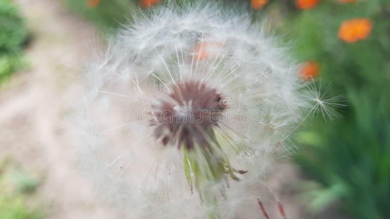 Fleurit l'amant photos stock