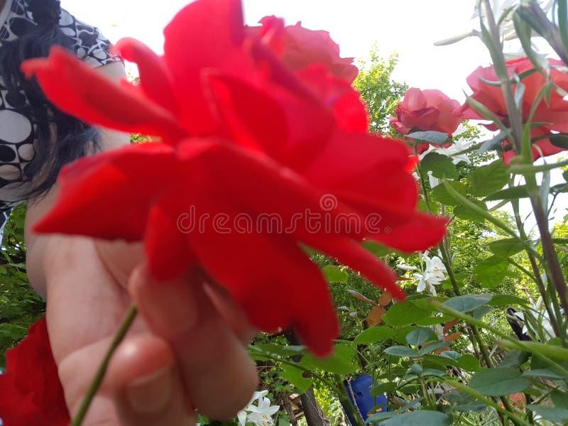 Fleurit l'amant photos libres de droits