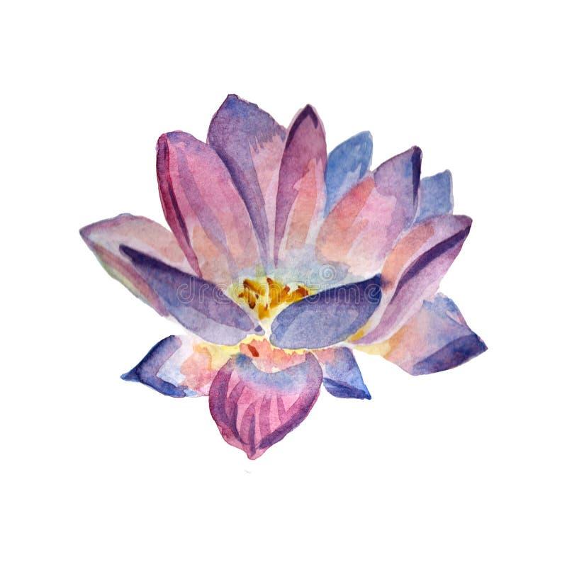 Fleurit l'illustration d'aquarelle Lotus pourpre tendre sur un fond blanc illustration libre de droits