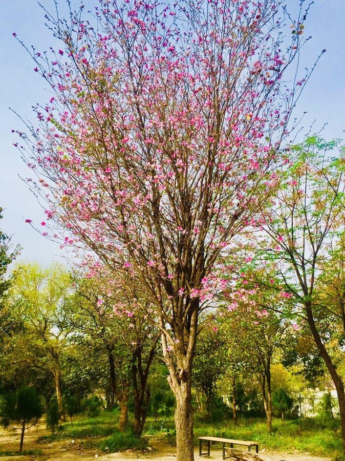 Fleurit la beauté à Islamabad image stock