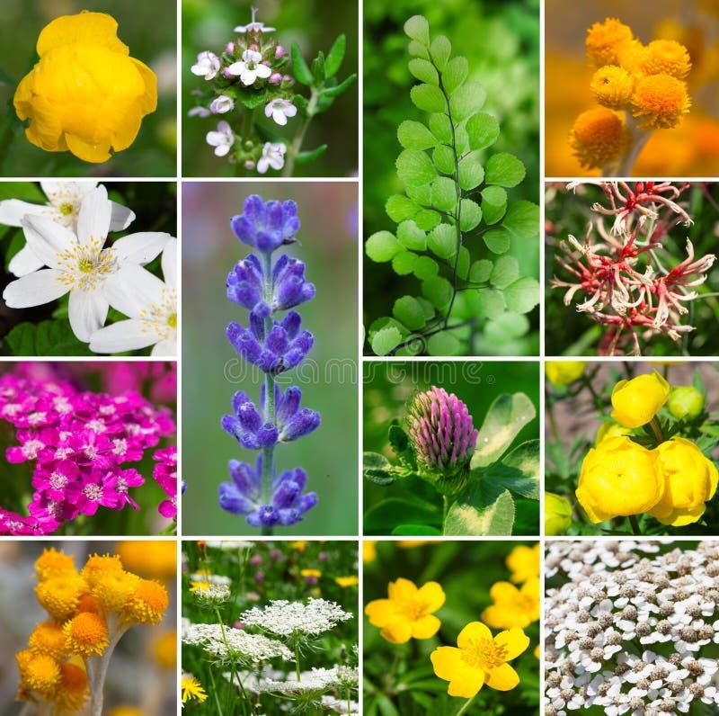fleurit la collection photos libres de droits