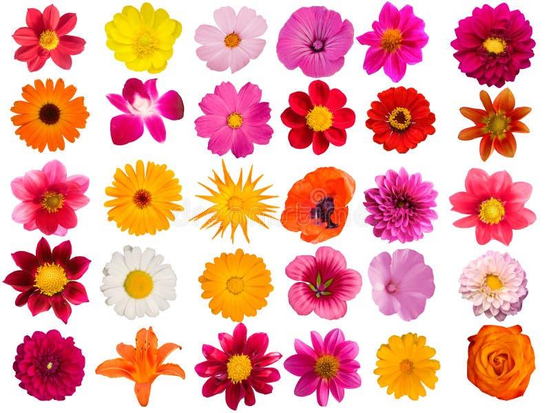 Fleurit la collection décorative photos libres de droits