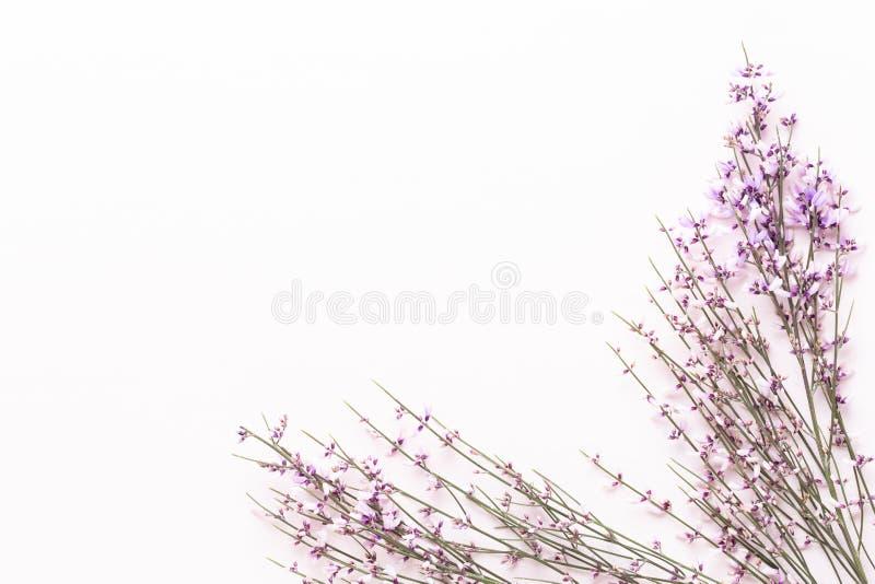 Fleurit la composition Fleurs roses sur le fond rose P?ques, concept de ressort Carte de voeux photo stock
