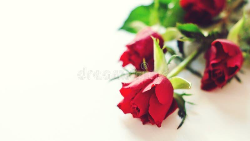 Fleurit la composition Roses rouges à la table blanche Humeur de matin avec des fleurs Carte heureuse de jour du `s de valentine  photos libres de droits