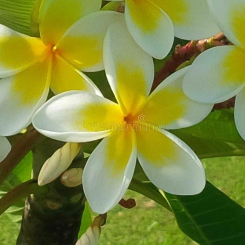 Fleurit la nature images stock