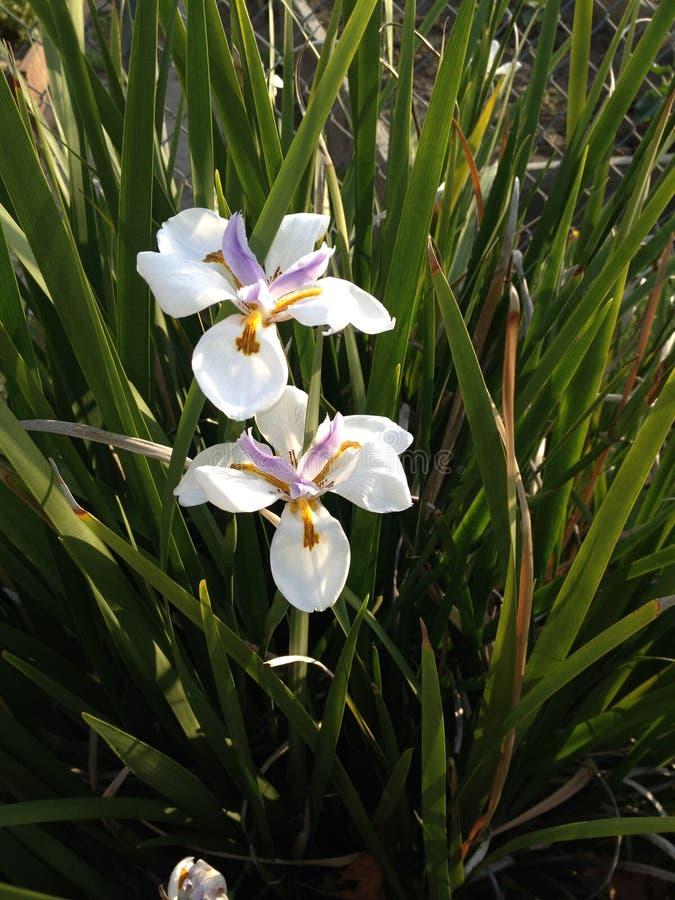 Fleurit la PIC de nature photographie stock