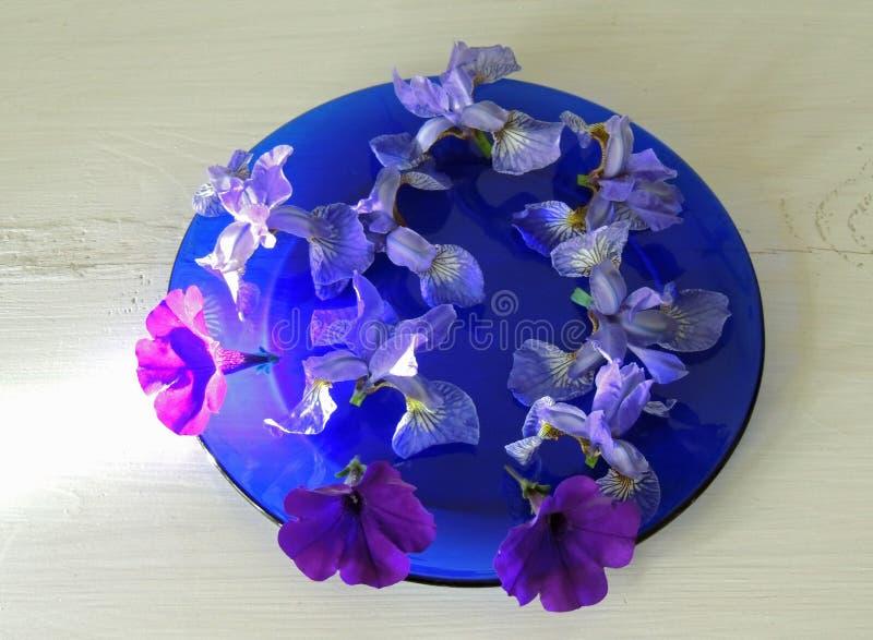 Fleurit la réflexion bleue d'ombre de plat d'iris de bourgeons de fleurs coupées photo stock