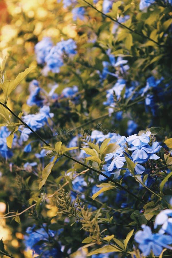 Fleurit la vie photographie stock
