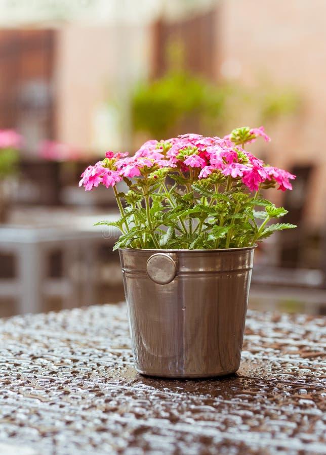 Fleurit le café extérieur de décoration photographie stock