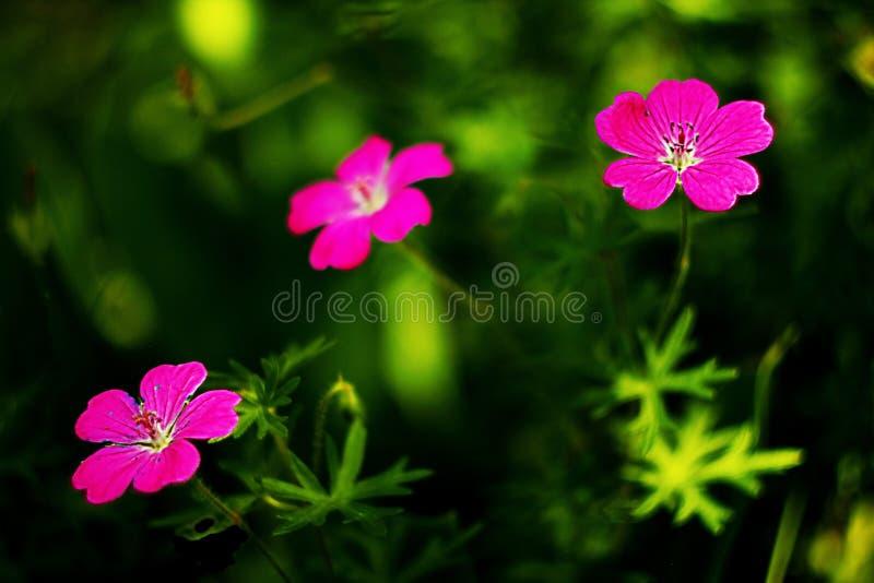 Fleurit le foto photographie stock libre de droits