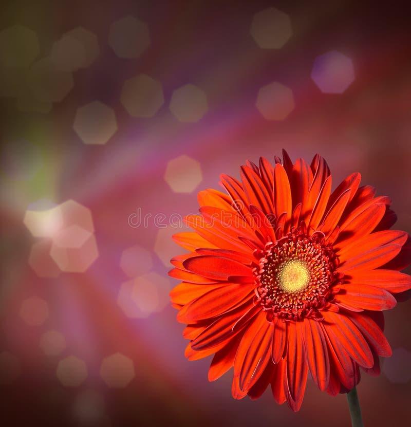Fleurit le gerbera sur le fond abstrait photographie stock libre de droits