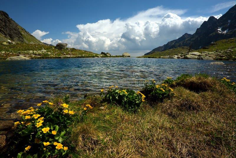 fleurit le jaune de montagne de lac d'horizon photos libres de droits