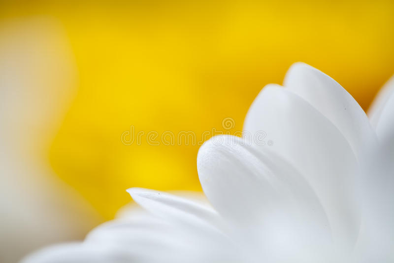 Fleurit le macro fond coloré photo libre de droits