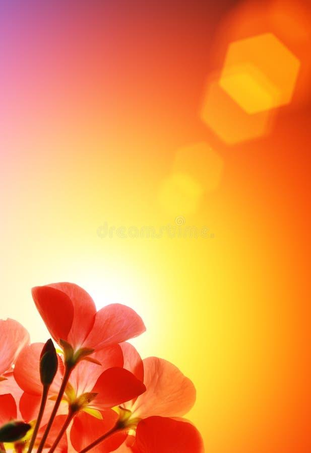 fleurit le rouge image libre de droits