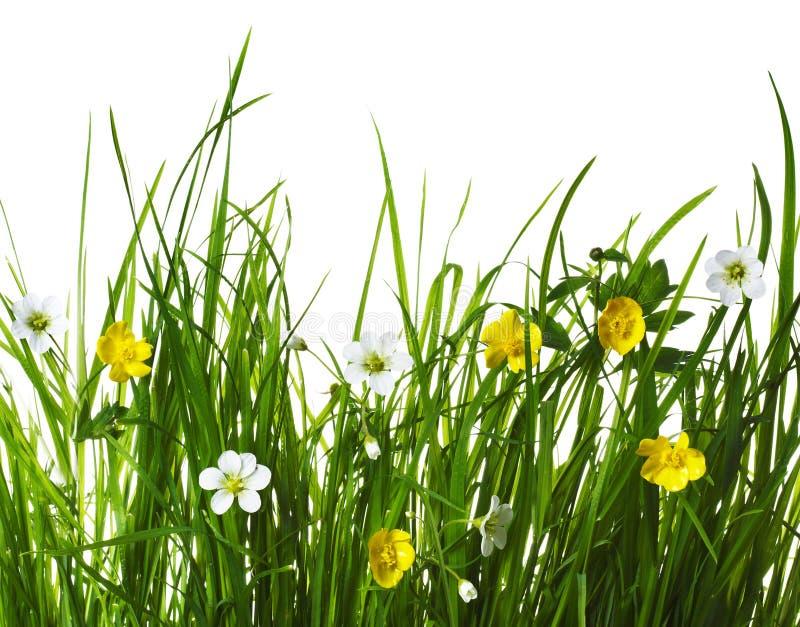 fleurit le vert d'herbe images libres de droits