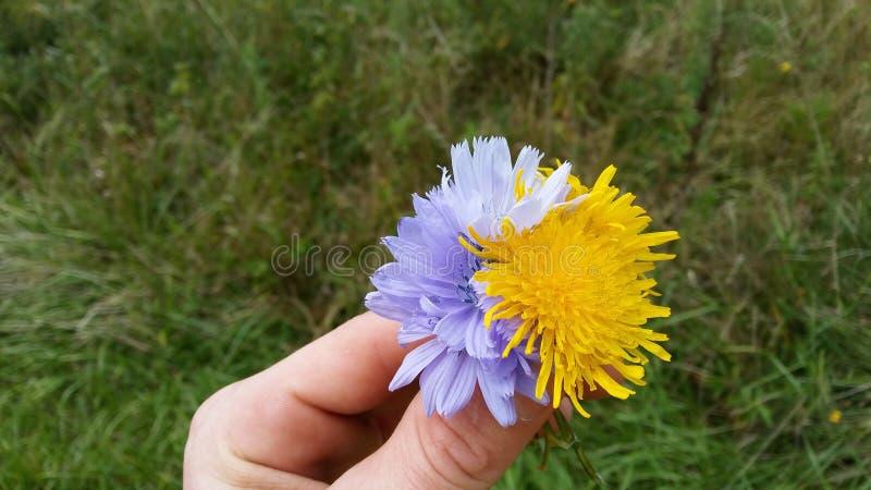 Fleurs à disposition image stock