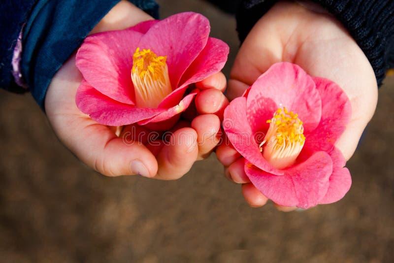 Fleurs à disposition photos stock