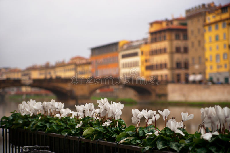 Fleurs à Florence images libres de droits