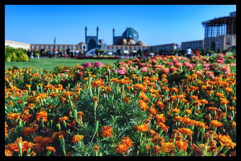 Fleurs à Isphahan, Iran images stock