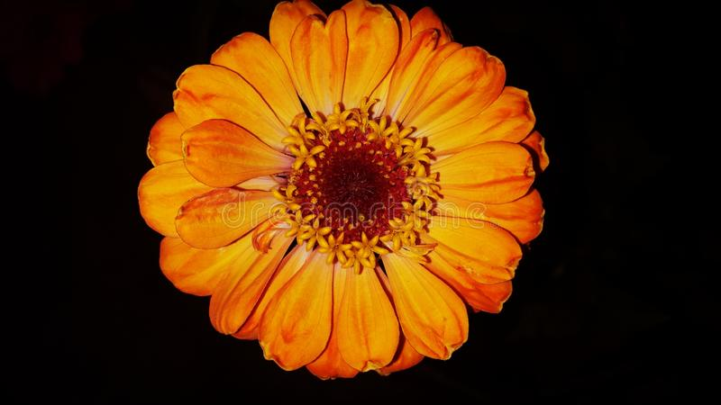Fleurs à la maison images stock