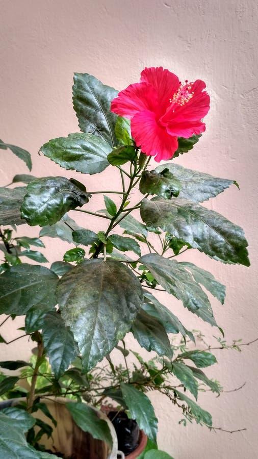Fleurs à la maison photographie stock