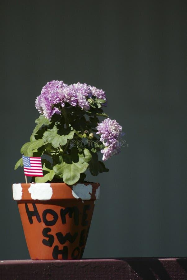 Fleurs à la maison douces à la maison photo stock