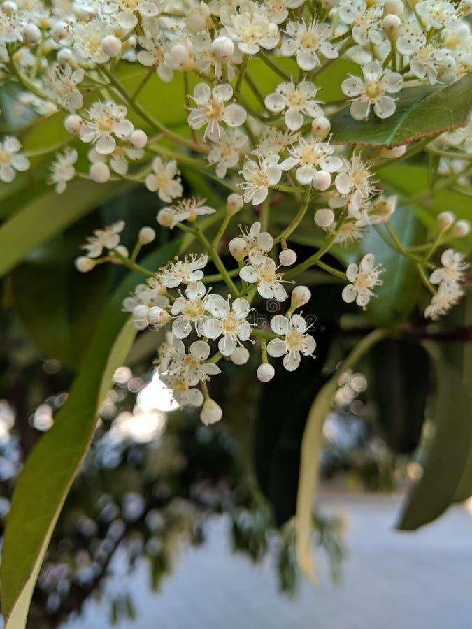 Fleurs à la source photos stock