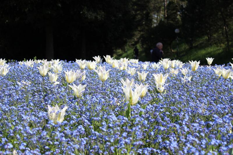 fleurs à Lyon photo libre de droits