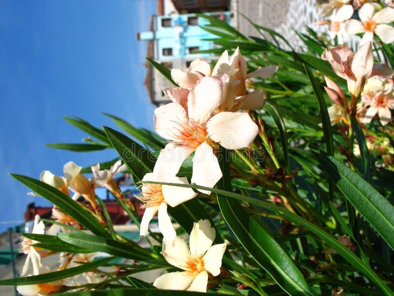 Fleurs à Venise photos stock