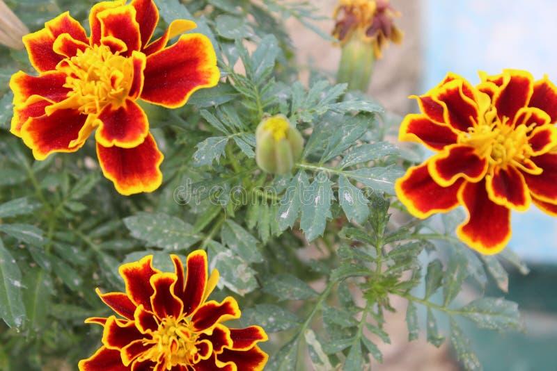 3 fleurs images stock
