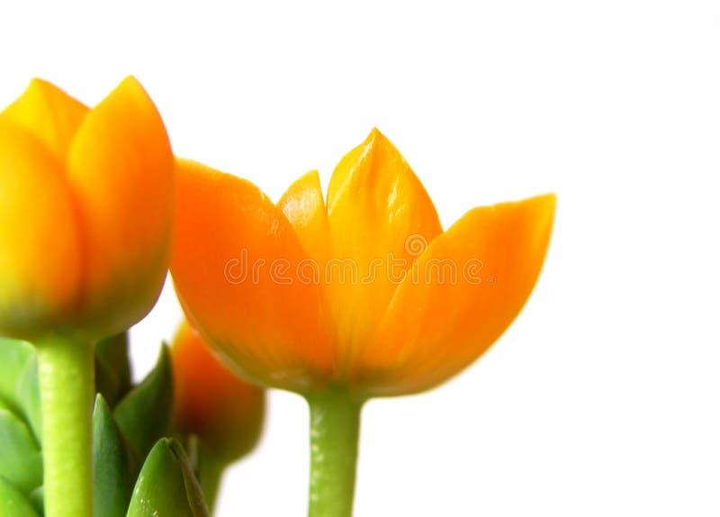 Fleurs 2 D Orange Photographie stock libre de droits