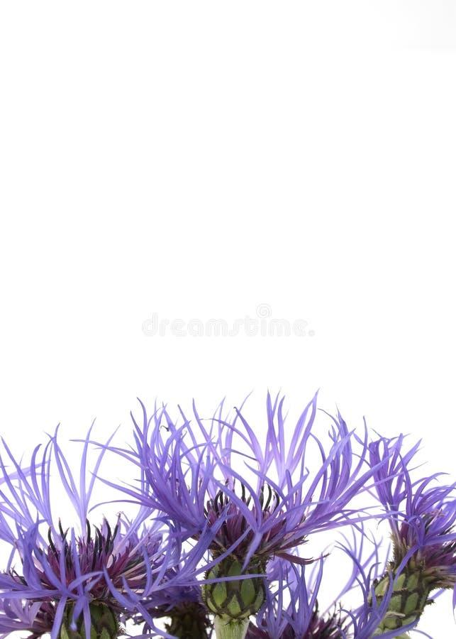 Fleurs 2 de bleu photos libres de droits
