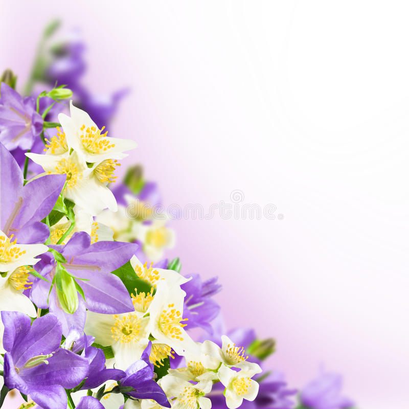 Fleurs photo stock