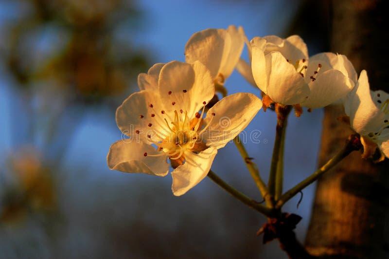 Fleurs photo stock