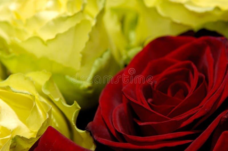 Fleurs 34 photos libres de droits