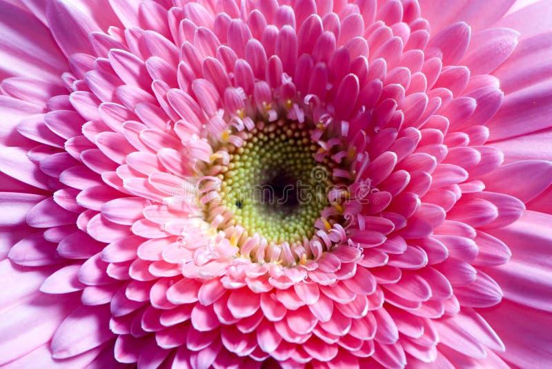 Fleurs 7 photos libres de droits