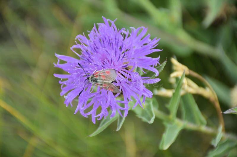 Download Fleurs image stock. Image du rose, paddy, zones, temps - 77156823