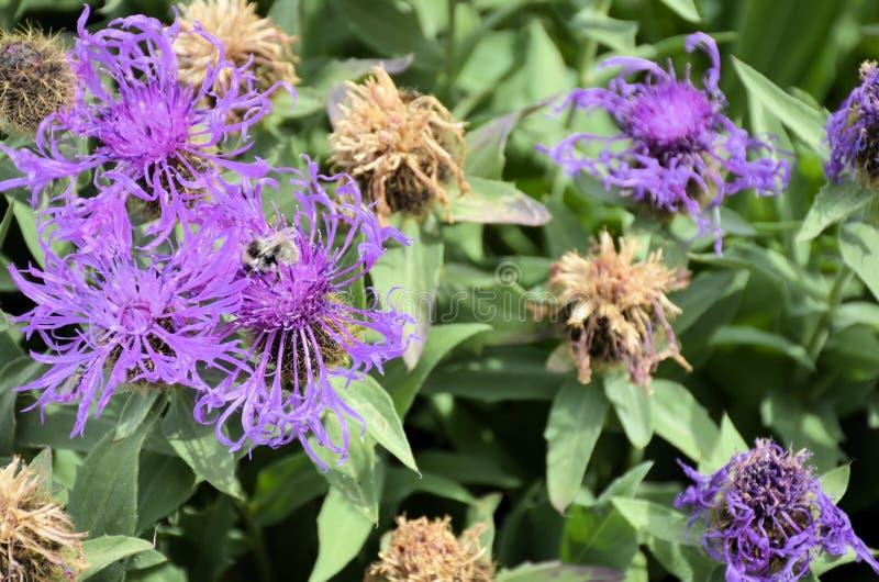 Download Fleurs image stock. Image du temps, fleurs, nature, fond - 77157923