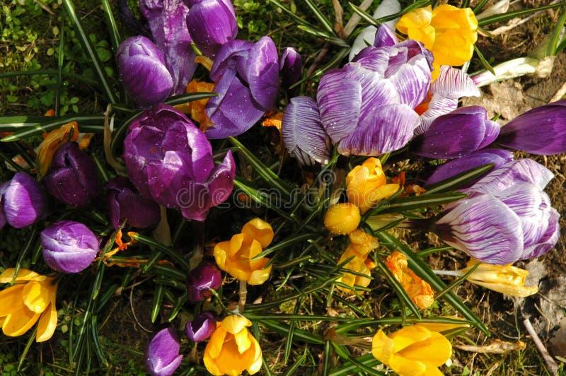 Download Fleurs image stock. Image du sauvage, jaune, marche, pâques - 84689