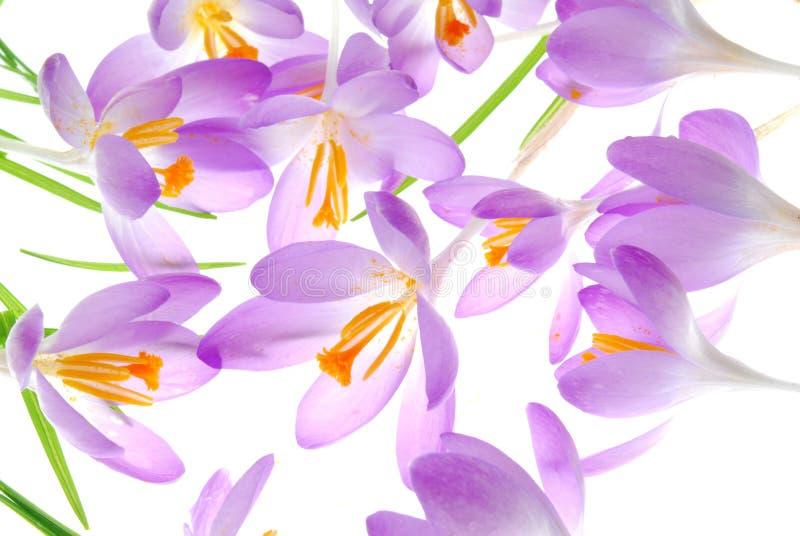 Download Fleurs image stock. Image du beauté, floral, ground, spécial - 8666881