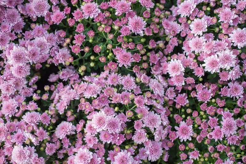 Download Fleurs image stock. Image du festive, beauté, centrale - 87706851