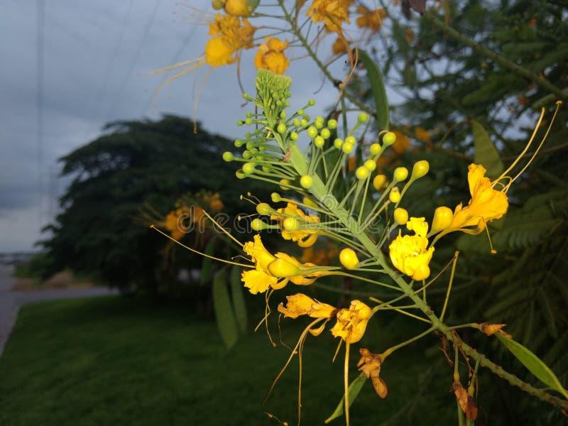 Fleurs ! image libre de droits