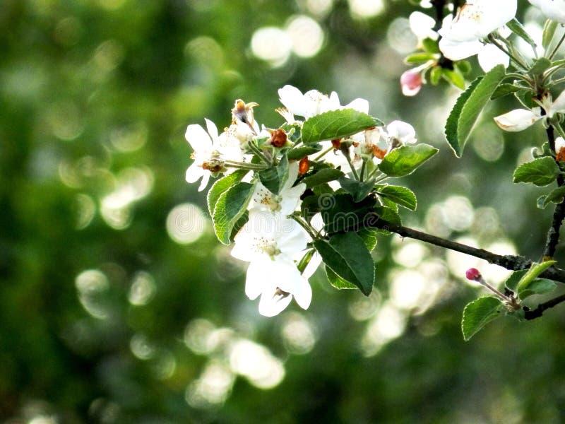 Fleurs abstraites de fond d'été de nature image stock