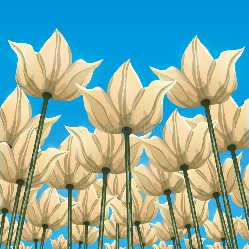Fleurs abstraites, vue inférieure contre le ciel bleu, illustration de vecteur, dessin coloré Bourgeons blancs jaunes tirés, péta illustration stock
