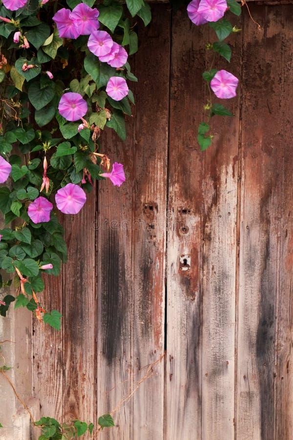 Fleurs accrochant devant une vieille porte en bois images stock