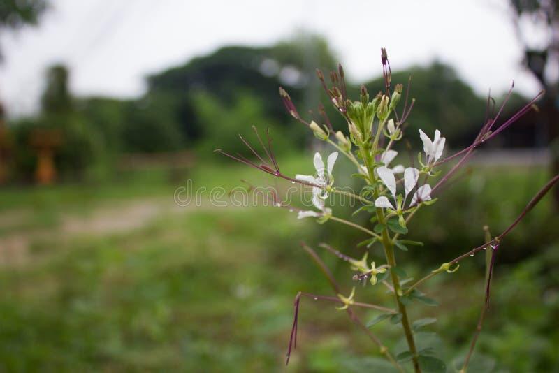 Fleurs après pluie images stock