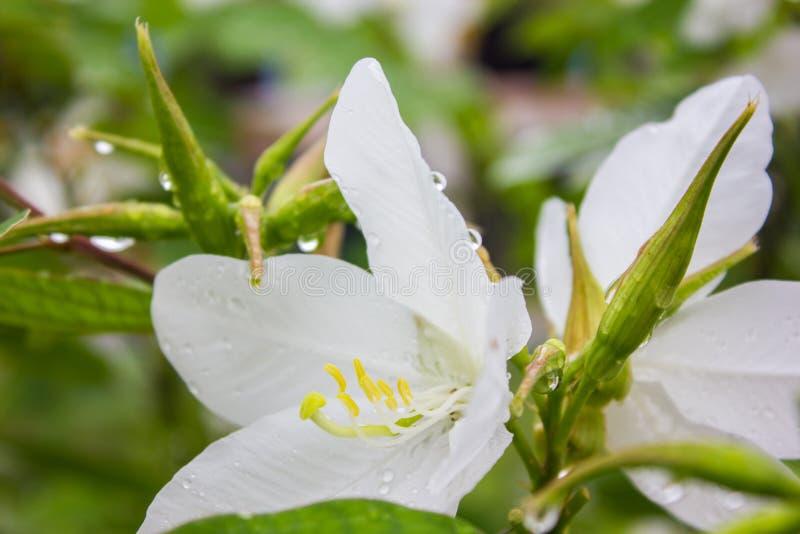 Fleurs après pluie photos stock